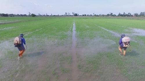 """สมาคมวิทยาการวัชพืชฯ เสวนา 21 ธ.ค.นี้ """"สารกำจัดศัตรูพืช อุปสรรคหรือตัวช่วยของ Thailand 4.0"""""""