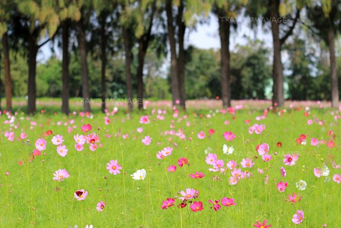 """""""10 งานดอกไม้แสนสวย"""" ชวนชมความงามสะพรั่งรับลมหนาว"""