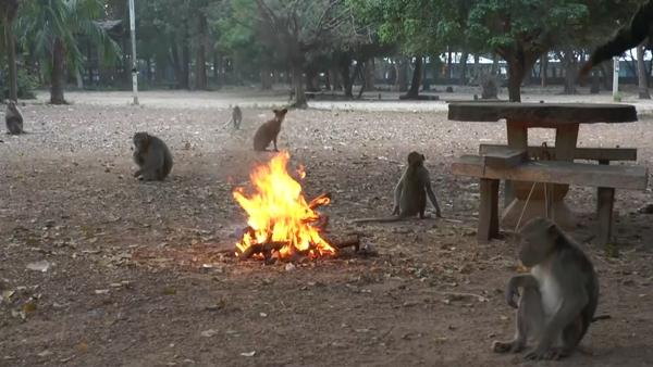 หนาวจริง ลิงเขาปฐวีหลบในถ้ำเป็นแถว พระ ชาวบ้านต้องก่อไฟให้ผิง