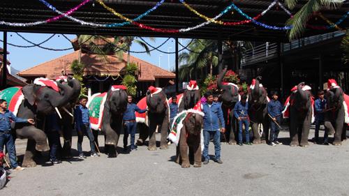 สวนนงนุช นำน้องช้างแสนรู้แต่ง ซานต้า-แซนตี้  ต้อนรับเทศกาลคริสต์มาส