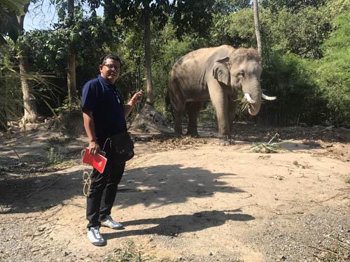 """นักท่องเที่ยวจีนปัด """"กระตุกหางช้าง"""" ทำไกด์โดนเหยียบดับ ทางการมังกรจี้ไทยเร่งหาสาเหตุ-จ่ายชดเชย"""
