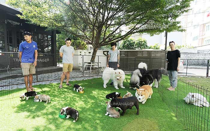 """Dog In Town"" คาเฟ่หมา มีหมาน่ารักมากมาย"
