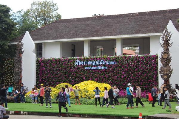 ไม่มีถอย ! ฝนกระหน่ำเชียงราย-นักท่องเที่ยวยังแห่ชมสวนดอกไม้งามไม่ขาดสาย