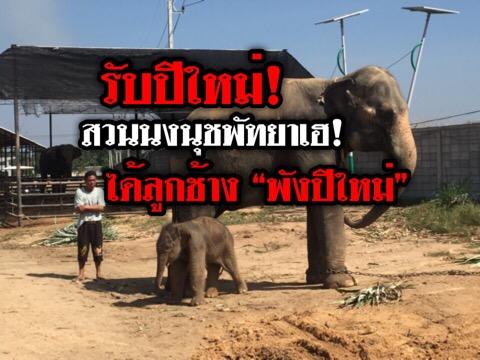 """สวัสดีปีใหม่! สวนนงนุชพัทยาเฮ..ได้ลูกช้างพังเพิ่ม ตั้งชื่อ """"น้องปีใหม่"""""""
