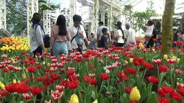 ชาวบุรีรัมย์แห่ชมทิวลิปหลากสีสัน แน่นอุทยานไม้ดอกเพ-ลาเพลิน