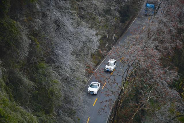 รถยนต์กำลังแล่นผ่านต้นไม้ที่ปกคลุมด้วยน้ำแข็งในเมืองจี้โจว มณฑลหูหนัน ภาพเมื่อวันที่ 4 ม.ค. (ภาพ ซินหวา)