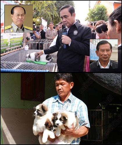 พล.อ.ประยุทธ์ จันทร์โอชา นายกรัฐมนตรี ซื้อสุนัขพันธุ์บางแก้ว 3 ตัว ของกลุ่มผู้เพาะเลี้ยง ระหว่างนำ ครม.สัญจรไปประชุมที่ จ.พิษณุโลก