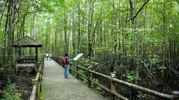 เส้นทางศึกษาธรรมชาติ ป่าชายเลนหงาว