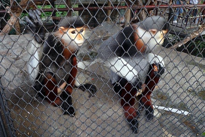 เจ้าลิงน้อยแสนซน
