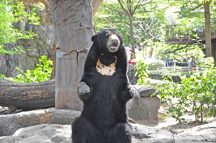 หมีขอขวัญใจเด็กๆ