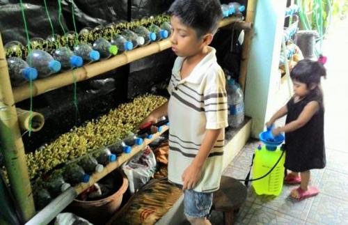 น้องภูริ ทองป้อง   ออกมาดูแลต้นผักแบบนี้ทุกวัน