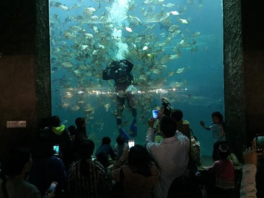 พิพิธภัณฑ์สัตว์น้ำหนองคาย จัดโชว์ให้อาหารปลาให้เด็กๆได้รับชม