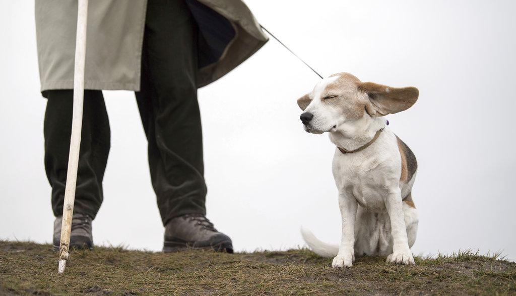 ต้นกำเนิดของการเพาะเลี้ยงพันธุ์สุนัข
