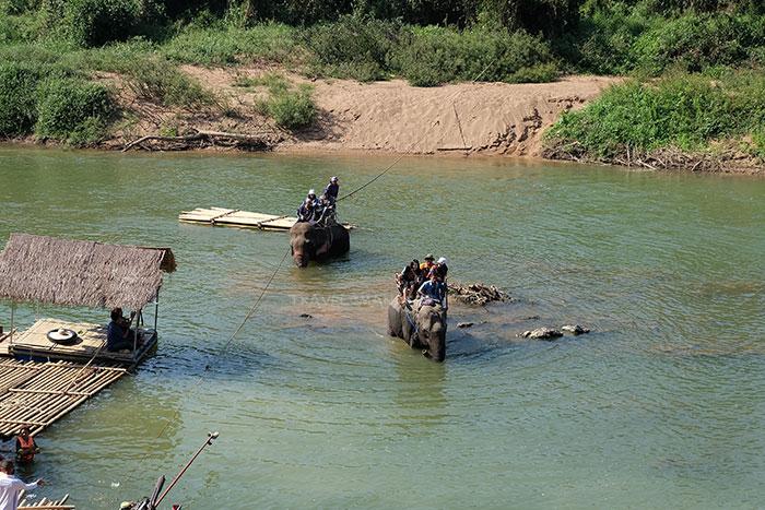 นั่งหลังช้างข้ามแม่น้ำยมที่ปางช้างแม่สิน