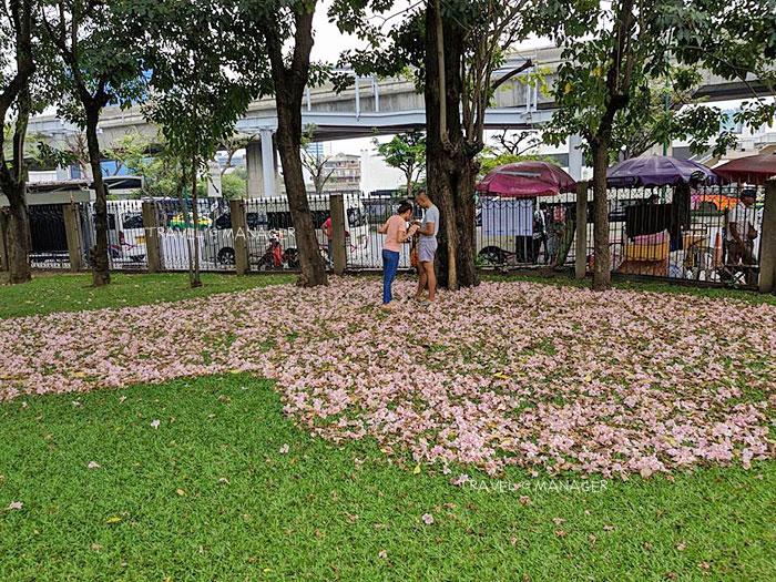 ที่สวนจตุจักรดอกไม้เริ่มร่วงโรย ทางสวนนำดอกที่ร่วงมากองรวมเป็นรูปหัวใจ (ภาพล่าสุด 25 ม.ค. 2561)