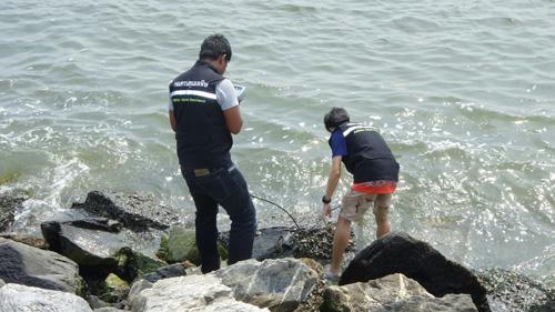 เร่งตรวจสอบ ปลาสลิดหินขนาดเล็ก ลอยตายเกลื่อนหาดทรายทอง  ส่งกลิ่นเหม็น