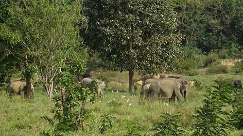 กรมอุทยานแห่งชาติฯ จับมือเอกชนติดกล้องแจ้งเตือนช้างป่า 25จุด ป้องกันพื้นที่เกษตรเสียหาย