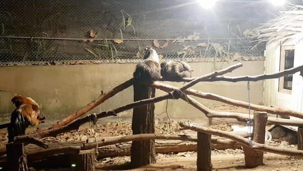 ภัยหนาวมาเยือน สวนสัตว์ขอนแก่นเปิดสปอตไลต์คลายหนาวให้สัตว์