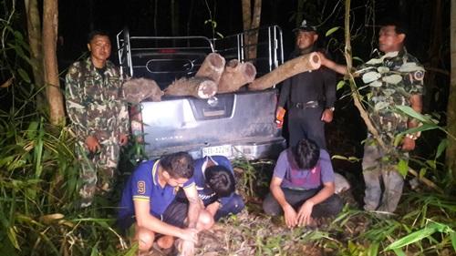 รวบ 3 เยาวชนลอบตัดไม้พะยูงในพื้นที่ป่าอนุรักษ์เขาหมูดุด ค่ากว่า 10 ล้านบาท