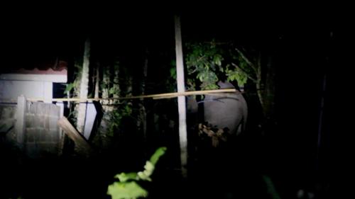 ช้างป่าพลายดุ๊กดิ๊ก ยังไม่กลับขึ้นเขาสอยดาว ทำชาวบ้านยังคงหวาดผวา(ชมคลิป)