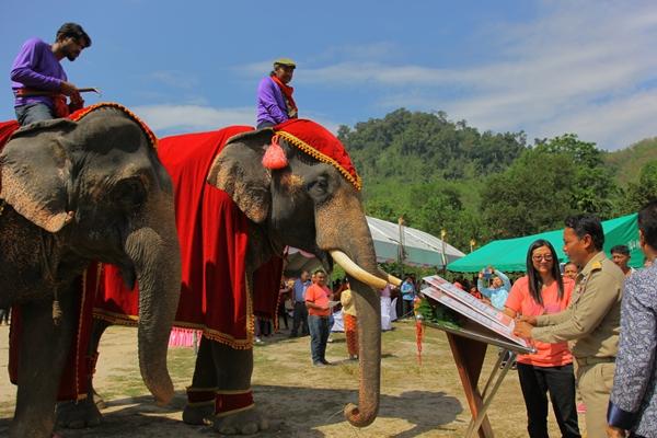 ฮือฮา! พังงาจดทะเบียนสมรสให้ช้าง สร้างสีสันวันแห่งความรัก