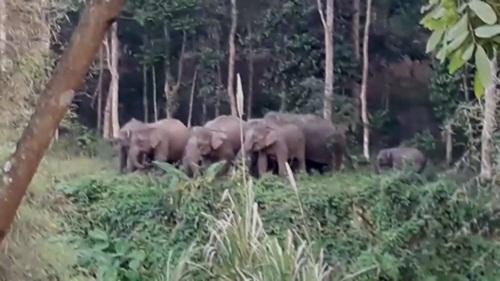 โขลงช้างป่ายังคงบุกทำลายสวนผลไม้ และเข้าประชิดหมู่บ้านทับไทร