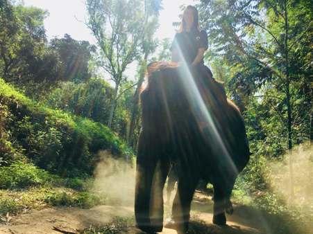 """ฝรั่งชอบมากส่องปางช้างที่ """"แม่ตะมานเชียงใหม่"""" วันนี้ไม่ได้มีแค่ """"ช้างโชว์"""" นักท่องเที่ยวแห่พาช้างแช่โคลนคึกคัก"""