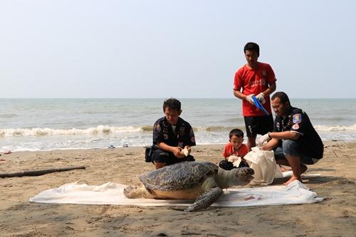 พบซากเต่าตนุขนาดใหญ่ตายเกยชายหาด อ.แหลมสิงห์ จ.จันทบุรี