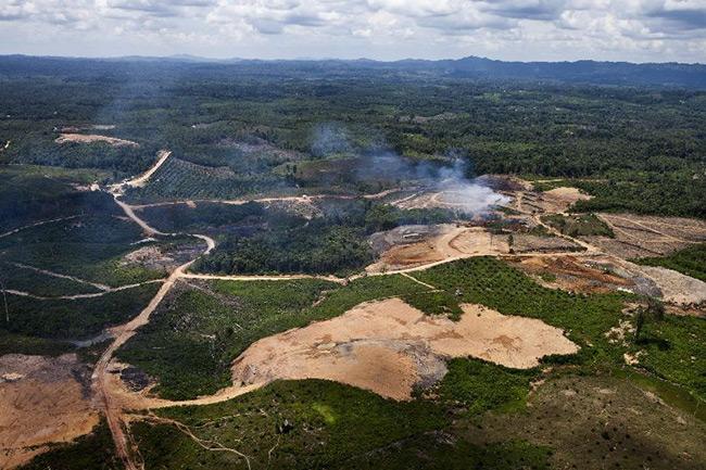 ป่า 10 จว.ภาคเหนือถูกรุกหนัก นักธุรกิจใต้-ทุนเกษตรตัวการใหญ่