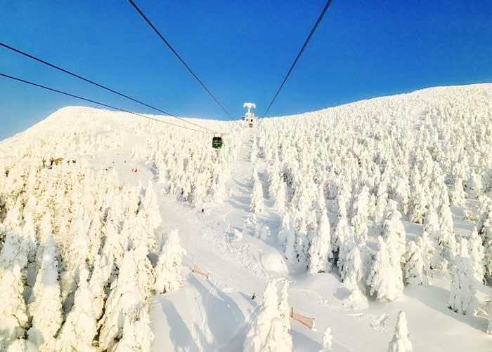 """ความงดงามของ """"ปีศาจหิมะ"""" ที่ภูเขาซาโอะ (ภาพจาก : World Pro Travel)"""