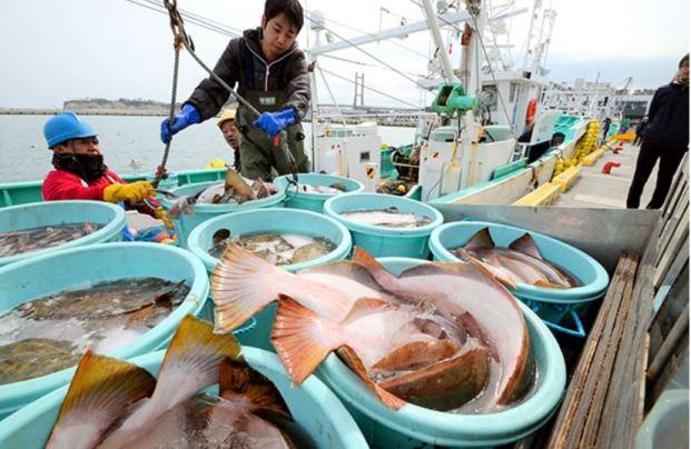 """ญี่ปุ่นยินดี ไทยเปิดรับอาหารทะเลจาก """"ฟุกุชิมะ"""" เป็นชาติแรก"""
