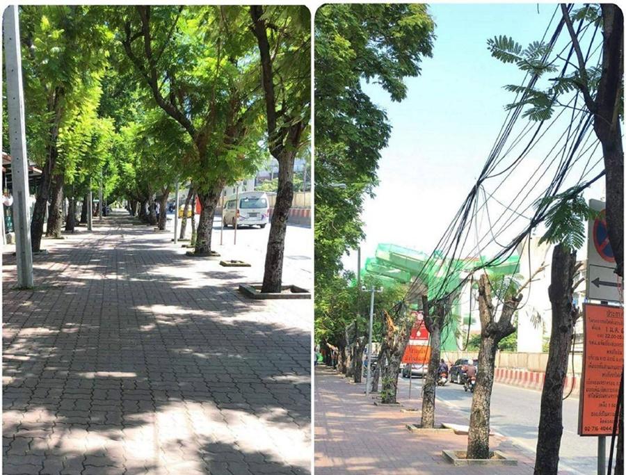 """แฉ """"อิตาเลียนไทย"""" ตัดต้นไม้สร้างรถไฟฟ้า ยังไม่ได้ขออนุญาต สุดเศร้าค่าปรับไม่กี่หมื่น"""