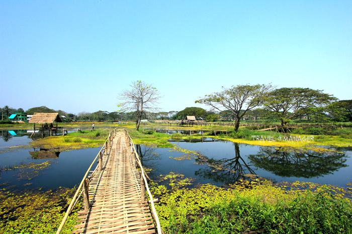 สะพานไม้ไผ่ทอดยาวนำชมจุดต่างๆในหนองน้ำใหญ่