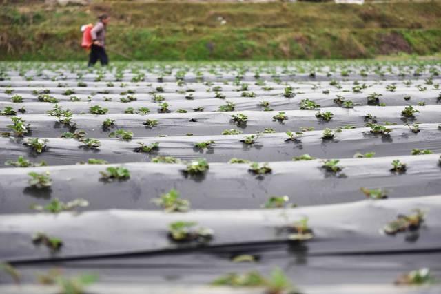 ฟาร์มที่ต้นไม้แตกใบเขียว ที่เมืองไคลี่ มณฑลกุ้ยโจว –ซินหวา