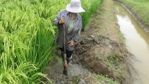 พายุฝนฤดูร้อนถล่มต้นข้าวใกล้เก็บเกี่ยวโค่นล้มจมน้ำเสียหาย อีกหลายพื้นที่น้ำท่วมขัง