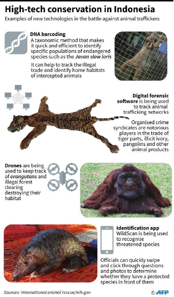 แผนภาพแสดงการใช้เทคโนโลยีมาช่วยในการติดตามผู้ลักลอบค้าสัตว์ปา (AFP Photo/John SAEKI)