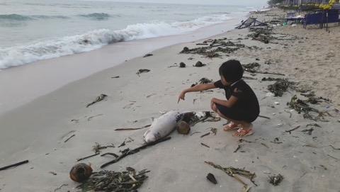 พบทั้งขยะ ซากโลมาเกยหาดเพชรบุรี