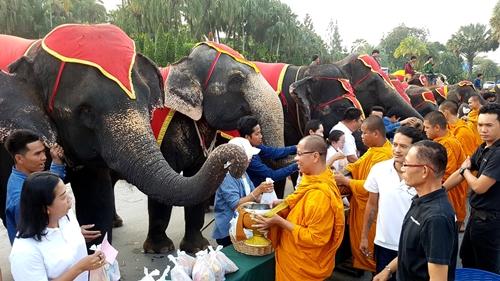 วันช้างไทย สวนนงนุช-สวนสัตว์เปิดเขาเขียวจัดกิจกรรมให้ช้าง