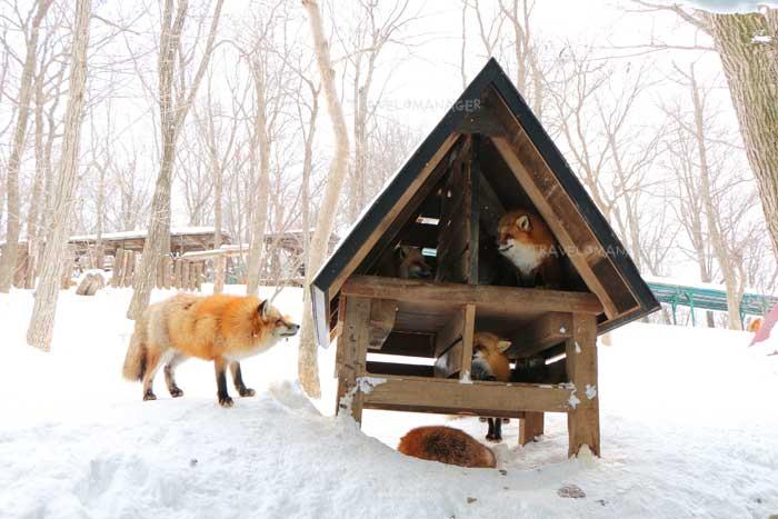 บรรยากาศภายในหมู่บ้านสุนัขจิ้งจอกซาโอะ