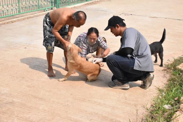 สวนสัตว์ขอนแก่นห่วงพิษสุนัขบ้าระบาด  ระดมฉีดวัคซีนป้องกันให้ชุมชนรอบข้าง