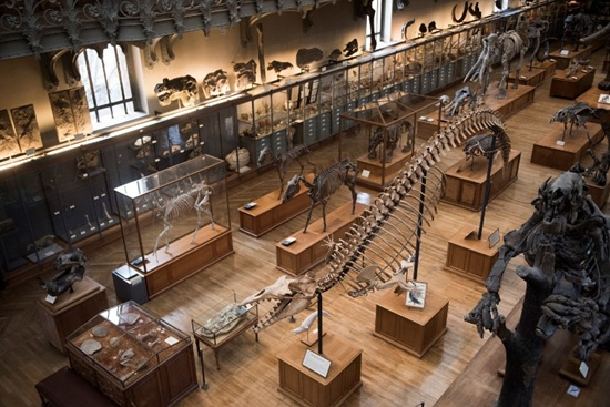 (FILES) A file photo taken on November 16, 2017 shows dinosaurs skeletons displayed at the paleontology gallery of the French museum of Natural History, in Paris. Earth is enduring a mass species extinction, scientists say -- the first since the demise of the dinosaurs and only the sixth in half-a-billion years. The reason? Humanitys voracious consumption, and wanton destruction, of the very gifts of Nature that keep us alive and healthy. Starting on March 17, 2018, a comprehensive, global appraisal of the damage, and what can be done to reverse it, will be conducted in Colombia. Martin Bureau/AFP