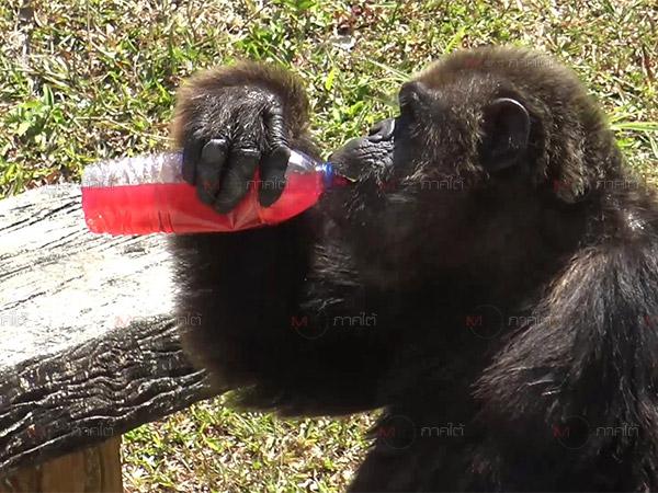 สวนสัตว์สงขลานำน้ำแดงให้ลิง และนำรถดับเพลิงทำฝนเทียมให้นกช่วยคลายร้อน