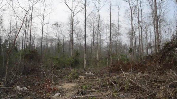 ชาวบ้านร้อง จนท.-คนมีสีเอี่ยว ลอบตัดไม้สวนป่าแพร่-เผาตอกลบรอยตัดซ้ำ