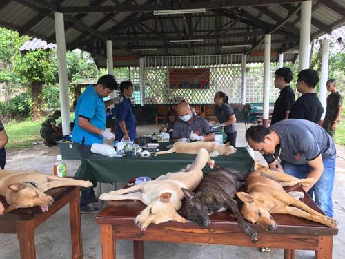 สถานการณ์พิษสุนัขบ้า จ.ตราด ไม่น่าเป็นห่วง ปศุสัตว์เร่งฉีดวัคซีนให้สัตว์อย่างทั่วถึง