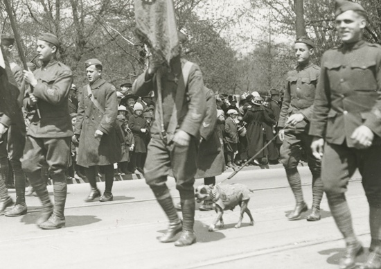 This April 30, 1919 photograph provided by the Connecticut State Library shows famed war dog Stubby walking in a homecoming parade for World War I veterans in Hartford, Conn. (Connecticut State Library via AP)