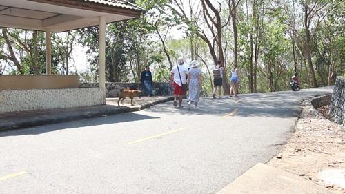 นักท่องเที่ยวร้อง!!! ลิง-หมาจรจัดเกลื่อนเขาพระใหญ่ พัทยา วอนเจ้าหน้าที่เร่งแก้ไข