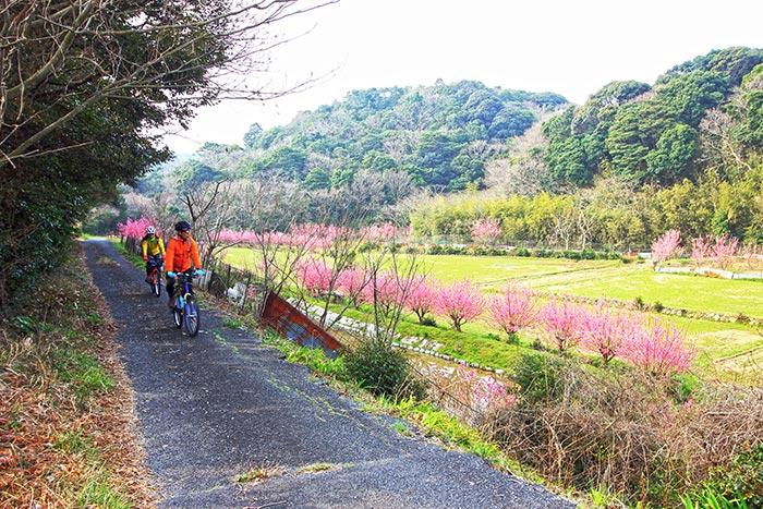 วิวต้นไม้ที่กำลังออกดอกสีชมพูสดใสในระหว่างทาง