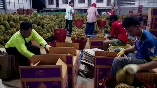 """ล้งผลไม้เมืองจันท์คึก """"อาลีบาบา"""" สั่งซื้อทุเรียนล็อตใหญ่จนต้องแพกส่งออกตลอด 24 ชั่วโมง(ชมคลิป)"""