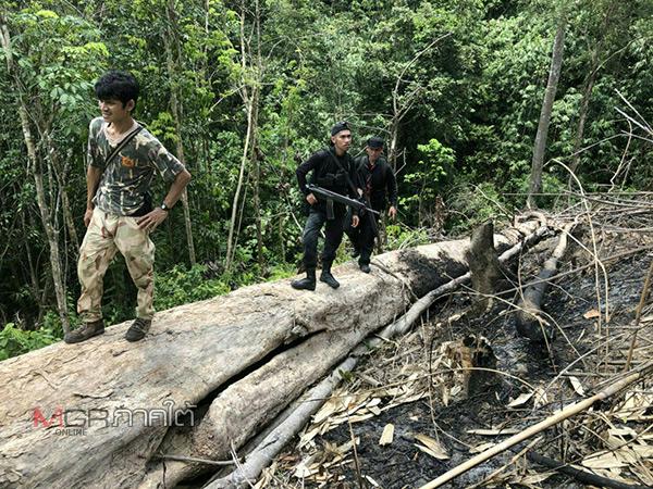 จนท.ลุยตรวจพื้นที่ป่าสงวนแห่งชาติป่าลาบู-ถ้ำทะลุ พบถูกลอบตัดไม้ และเผาป่า