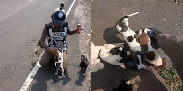 ตร.ศรีสะเกษ เข้าช่วยลูกสุนัขถูกปล่อยทิ้งข้างถนน แถมช่วยหาบ้าน ชี้อันตรายมาก